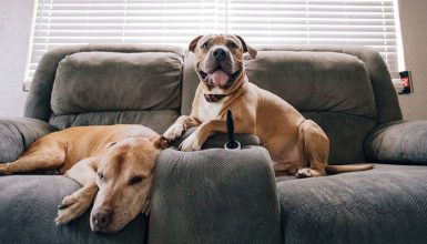 remove pet odor from microfiber couch